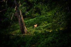Deer in Sun Valley, Idaho