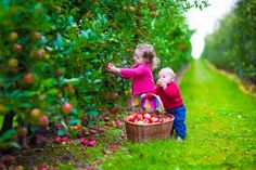 Have an adventure at a pick-your-own apple farm.