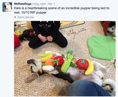 Funny Tweets Rating Adorable Dogs And More