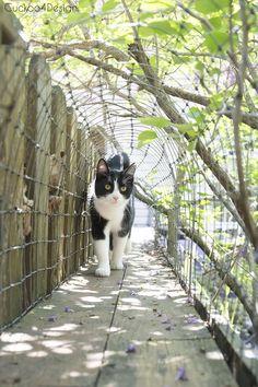 Cat Training cat walking inn outdoor cat tunnels - How to build outdoor cat tunnels to keep your cats safe Outdoor Cat Tunnel, Outdoor Cat Run, Outdoor Cat Enclosure, Reptile Enclosure, Cat Toilet Training, Cat Playground, Cat Pose, Cat Garden, Cat Condo