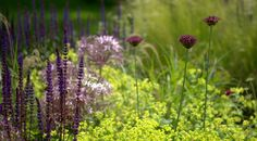 Country Garden 2 by Paul Ridley Design