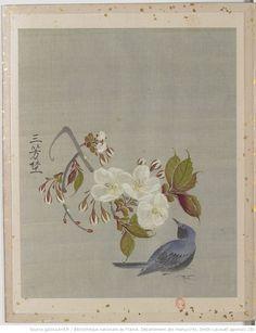 Bnf, Rooster, Album, Type, Nature, Painting, Animals, Book Binding, Naturaleza