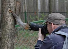 The Ridiculously Photogenic Squirrel ... Perhaps something our photography client may find of interest #dsmmcm1314