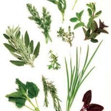 Il giardino in una fioriera, 5a parte: le piante aromatiche in vaso