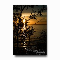 Sunset Photography Silhouette tree branches by CrystalGaylePhoto, $3.50