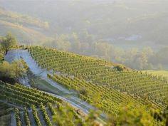 #comunicare un #territorio andando oltre il proprio prodotto #Gavi #piemonte #piemontewine #grandebiancopiemontese #LabGavi#cultura #agricoltura