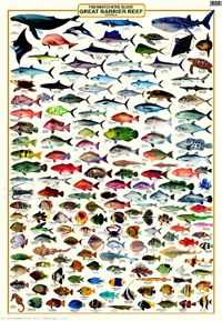 A laminated fish identification poster covering the fish of the Great Barrier Reef.