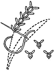 Wheat-ear stich and detached wheat-ear stitch. - It is formed of two rows of spikes with a Chain stitch between. To work, draw three parallel lines as a guide. Bring up the needle on the centre line. Make a Chain stitch. Insert the needle on the right-hand line at the same level as the Chain stitch ; bring it out in the Chain stitch, and draw the thread through. Repeat the same toward the left. The stitch may be worked also with spikes on one side and Bullion stitches on the other.