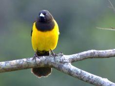 Marshbird,_Yellow-rumped3_DarioSanches.jpg (1289×967)
