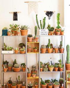 Passion cactus chez Haut Les Mains, par The Cactus Corner. #cactus #hautlesmains #passioncactus