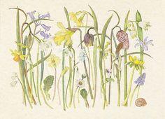 Gallery 3 of the Botanical and natural history artist Helga Hislop. Botanical Flowers, Botanical Illustration, Botanical Prints, Watercolour Tutorials, Funny Art, Botany, Spring Flowers, Flower Art, Journal 3