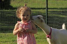 kid goat kisses