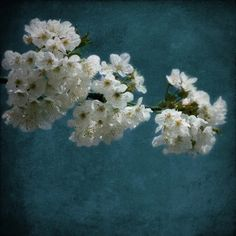 Appletree Fine Art Photography by AnneSolfud on Etsy, $15.00