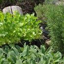 9 Detox Herbs That Will Make You Feel Like a Million Bucks