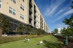 Pet friendly luxury apartments Westshore Tampa, FL Luxury Apartments, Mosaic, Sidewalk, Pets, Animals And Pets, Walkways, Mosaics, Pavement, Mosaic Art