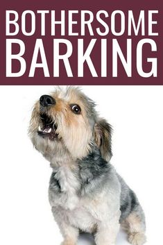 Puppy Training Barking - How To Get Your Pup Under Control - Best Dog Training Dog Training Camp, Best Dog Training, Schnauzer, Puppy Barking, Dog Commands, Easiest Dogs To Train, Aggressive Dog, Dog Hacks, Dog Behavior