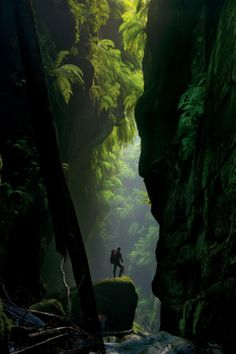 Claustral Canyon,Blue Mountains,  Australia