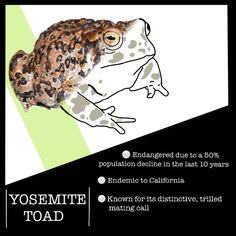 The rapid decline of the Yosemite Toad (Anaxyrus canorus) pushed the Endangered Species Act of 1973 to list the species as 'Threatened' in 2014.
