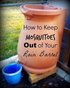 Greneaux Gardens: How to Keep Mosquitoes from Breeding in Your Rain Barrel Spring brings mosquitoes to the rain barrels, but this easy trick will keep them away NATURALLY!