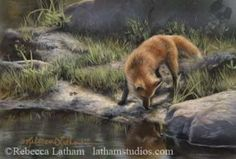 Curious - Red Fox by Rebecca Latham