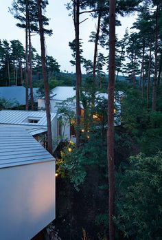 A Cluster of White Rooms Meander Between The Trunks of Cherry and Pine Trees