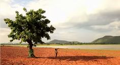 Swecha by Uday Gurrala. Wide shot where subject throws a paper plane. He is standing is the shadow of the tree.