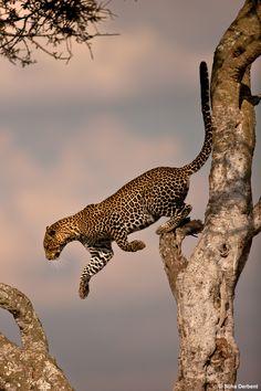 Kenya'da (Masai Mara, Nairobi, Nakuru) @sedventure ile @suhaderbent danışmanlığında foto safari