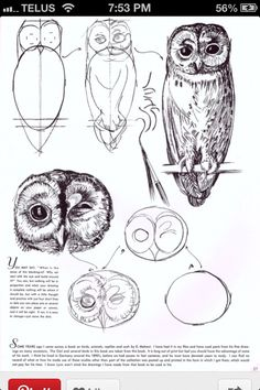 Owl drawing tutorial