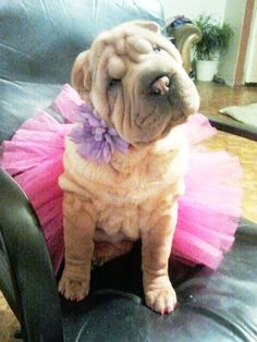 Hot Pink Dog Tutu All Sizes by GlamourDogBoutique on Etsy, $7.00