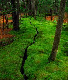 a mossy stream at the Abby Aldrich Rockefeller Gardens, Mount Desert Island, Maine (photo by Preston Manning)