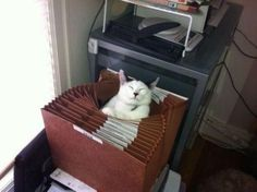 Organize Your Cats Using Spare Teacups   20 Brilliant Ways To Organize Your Cats