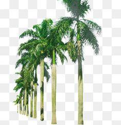 가짜 야자나무,나무,식물,녹화 Tree Psd, Indian Flag Images, Indian Wedding Album Design, Mask Images, Picsart Png, Hd Background Download, Background Images For Editing, Photoshop, Cute Images
