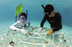 Mini marine biologists swim with manta rays, track sea turtles via GPS and help rebuild coral reefs at Four Seasons Resort Maldives.