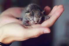 Newborn Kitten in Hand.