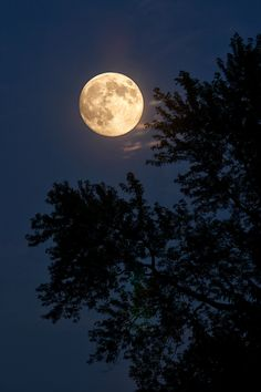 The August 2014 Supermoon, captured on the evening of Saturday August 9 2014 from my farm property in Beavercreek Township Ohio