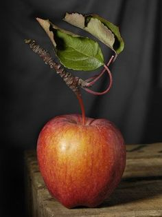 Forgotten apples, 16 old varieties of fruit - Obst L'art Du Fruit, Fruit Art, Fruit And Veg, Fruit Photography, Still Life Photography, Apple Fruit, Red Apple, Fruit Picture, Still Life Fruit