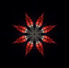 a chilli kaleidoscope