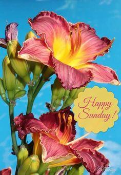 Happy Sunday!