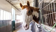 Horse Slaughterhouses Could Return To America
