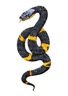 Tattoo Design for a friend who has a pet russian rat snake named Rasputin- Phoebe Kirk Snake Names, Rat Snake, Rasputin, Hair Raising, Rats, Tattoo Designs, Tattoo Ideas, Graphic Art, Fine Art Prints