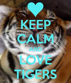 KEEP CALM AND LOVE TIGERS