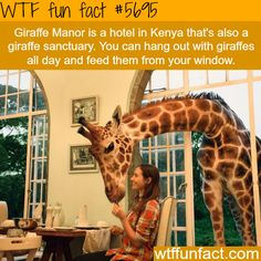 Giraffe Manor - A Hotel in Kenya, located in a Giraffe Sanctuary! ~WTF awesome fun fact
