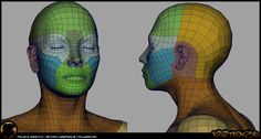 face topology | Female Topology