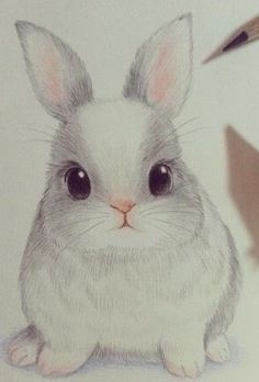 Cute, drawing, and rabbit image bunny sketches, animal sketches, cute a Pencil Sketches Of Animals, Bunny Sketches, Pencil Drawings Of Flowers, Cute Animal Drawings, Art Drawings Sketches, Disney Drawings, Cute Drawings, Rabbit Drawing, Bunny Tattoos