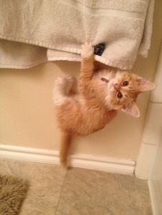 """""""No! Not until someone gets rid of that spider…"""" Hahaha! Looks like a baby Max!"""