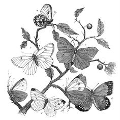 Butterfly Branches - Natural History Clip Art.     thegraphicsfairy.com            tons of free vintage images for crafters