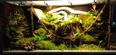 Paludarium sous-bois tropical par Bupa