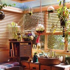 В наших широтах украшать дом композициями из насекомоядных растений непросто. Но если постараться то можно получить волшебную комнату. Seth's carnivorous plant corner is getting slightly out of hand  #carnivorousplants @mcculloch30  ( # @ruthiegarden ) by exotic.flora