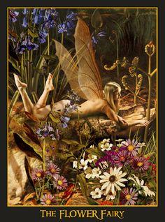 The Flower Fairy  by  Howard David Johnson