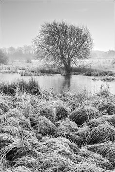 Waltham Brooks by John Dominick World Wetlands Day, Colour Images, Trees, Black And White, Outdoor, Outdoors, Black N White, Tree Structure, Black White